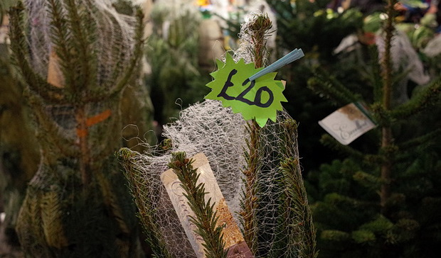 Where to buy a real Christmas tree in Brixton – 2015 listing of ...