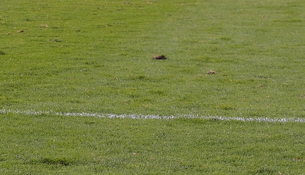 Referee from parallel universe deprives Dulwich Hamlet of vital win over Grays Athletic, Hamlet 1 Grays 1, Saturday 29th August 2015