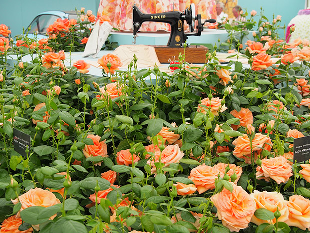 Roses and Floristry Vintage Festival at the RHS Hampton Court Palace Flower Show, Hampton Court, London, Monday 8th July 2013