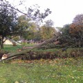 Storm aftermath: two trees down on Coldharbour Lane, Brixton