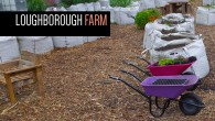Run by the ever-busy Loughborough Junction Action Group (LJAG),  the Loughborough Farm is a community growing project that is currently active in two sites in the Loughborough Junction area.