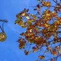 Autumn in Brixton: Brixton Water Lane to Coldharbour Lane - in photos