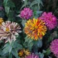 Loughborough Junction's scented community garden