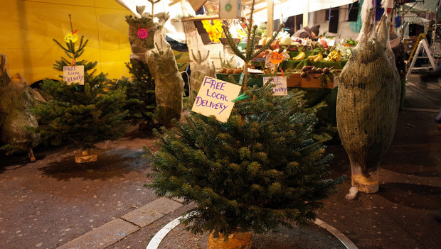 Where to buy a real Christmas tree in Brixton