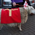 A few heads were turned in Railton Road yesterday afternoonat the sight of this patriotic sheep trotting about, complete with a pair of England flags stuck on its head.