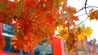 Though the weather has taken a turn for the worse, Brixton recently enjoyed a few glorious days which allowed the early Autumn colours to shine. Here is a collection of […]