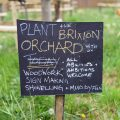 In photos: the Brixton Orchard starts to bloom in spring