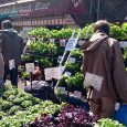 Traders on the popular Brixton Farmers' Market on Station Road were surprised to receive a letter from Lambeth telling them that the market was to be closed down at the end […]